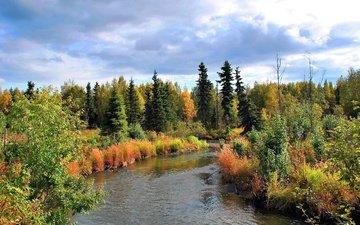 деревья, лес, пейзаж, осень, речка, аляска