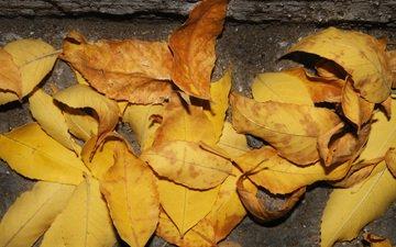 листья, осень, асфальт