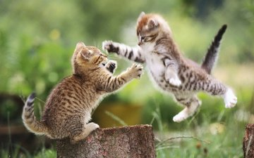 photo, flight, the situation, the game, cats, predators, attack, positive
