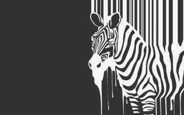 zebra, animal, h. b.