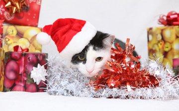 новый год, кот, кошка, подарки, котенок, колпак, коробки, мишура