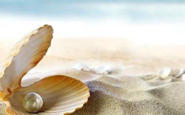 on the sand, shell pearl, pearl