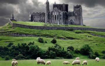животные, замок, овцы