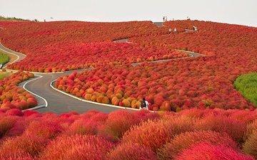 японский сад, после прихода осени