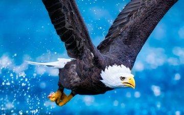 заставка орла в полете