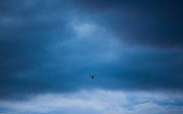 the sky, minimalism, bird