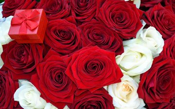 flowers, roses, red, bouquet, box, offer