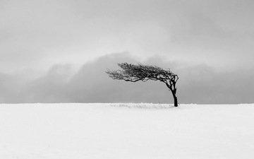 snow, tree, field, m