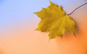 осень, крупный план, кленовый лист