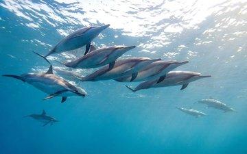 the ocean, dolphins