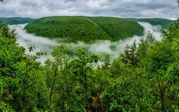 лес, туман, ущелье, пенсильвания, гранд-каньон, штат пенсильвания, grand canyon of pennsylvania, pine creek gorge, большой каньон пенсильвании