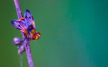 фон, цветная, муха, м