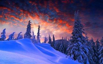 snow, winter, spruce, the snow, winter evening