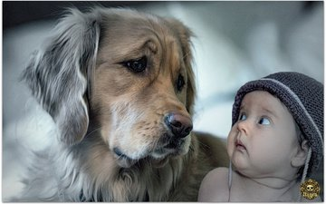 малыш, пес