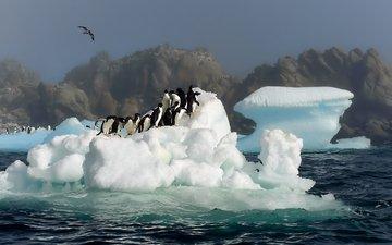 вода, снег, антарктида, пингвины обои, птицы картинки, прыжок фото
