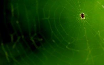микро, паук, паутина, супер макро