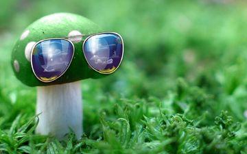 природа, зелёный, макро, очки, гриб