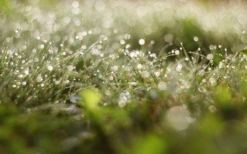 трава, зелень, зелёный, роса, капли, грин