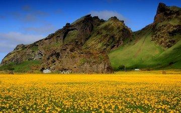 небо, цветы, горы, поле, весна, одуванчики, долина, желтые