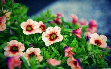 природа, nice flower bokeh. цветы и растения