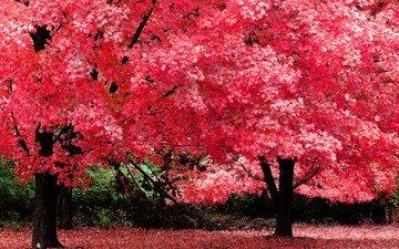 природа, дерево, красиво