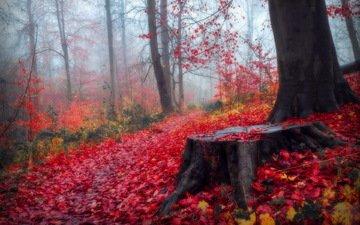 деревья, лес, листья, пейзаж, осень, пенек