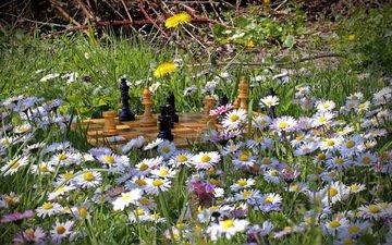 flowers, nature, summer, chess