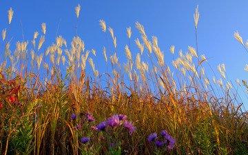 небо, цветы, трава, поле, луг, растение
