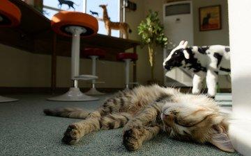 кот, кошка, сон, лежит, спит, комната