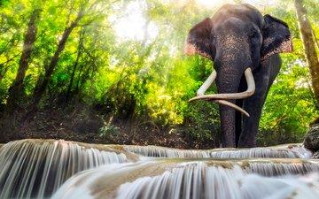 вода, река, природа, слон, каскады