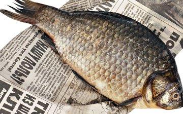 буквы, текст, газета, рыба, вобла