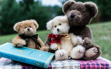 мишки, игрушки, книга, мягкие