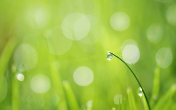 grass, a blade of grass, greens.drop, rosa.glare, drops on the grass
