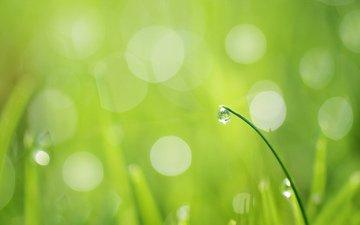 трава, травинка, зелень.капля, роса.блики