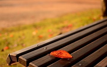 nature, macro, autumn, sheet, bench