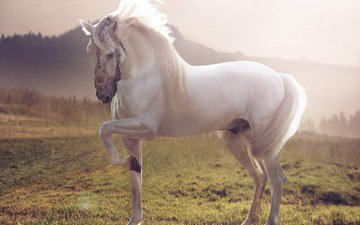 лошадь, трава, природа, фон, белый, конь, жеребец