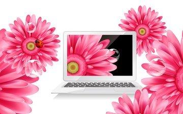 цветы, божья коровка, ноутбук, герберы