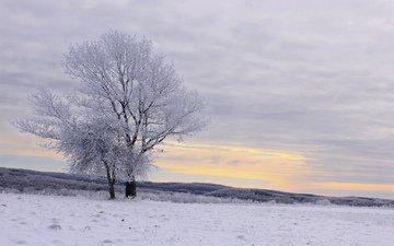деревья, снег, зима, пейзаж, иней