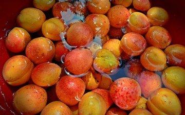 вода, фрукты, урожай, абрикосы