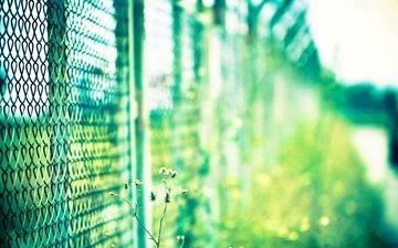 макро, цветок, сетка, ограда