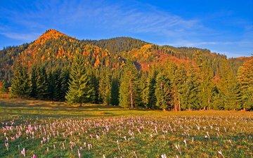 небо, цветы, деревья, горы, лес, луг, румыния