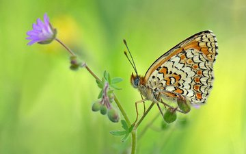background, flower, butterfly, insects