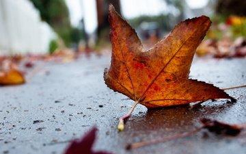 грусть, осень, лист, асфальт