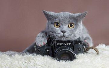 кошка, взгляд, фотоаппарат, зенит, когти