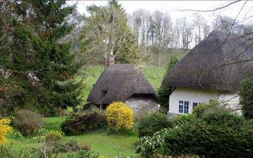природа, кусты, деревня, дома, англия, ель