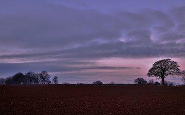 небо, деревья, вечер, поле