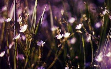 цветы, трава, бутоны, полевые, боке