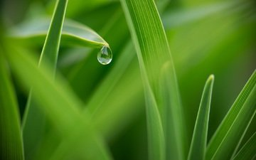 трава, макро, роса, капля