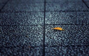 фон, лист, улица, асфальт