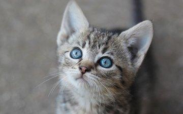 глаза, взгляд, котенок